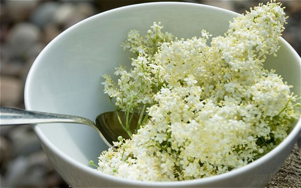 Elderflower-Wine-Recipe